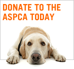 We Support the ASCPA